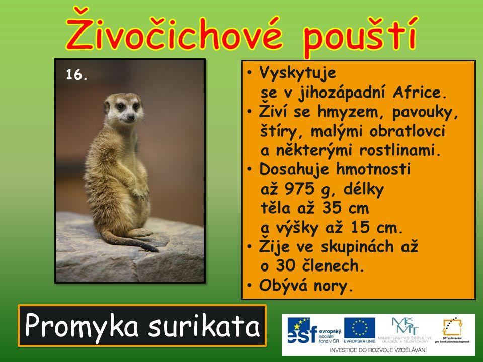 Promyka surikata Vyskytuje se v jihozápadní Africe. Živí se hmyzem, pavouky, štíry, malými obratlovci a některými rostlinami. Dosahuje hmotnosti až 97