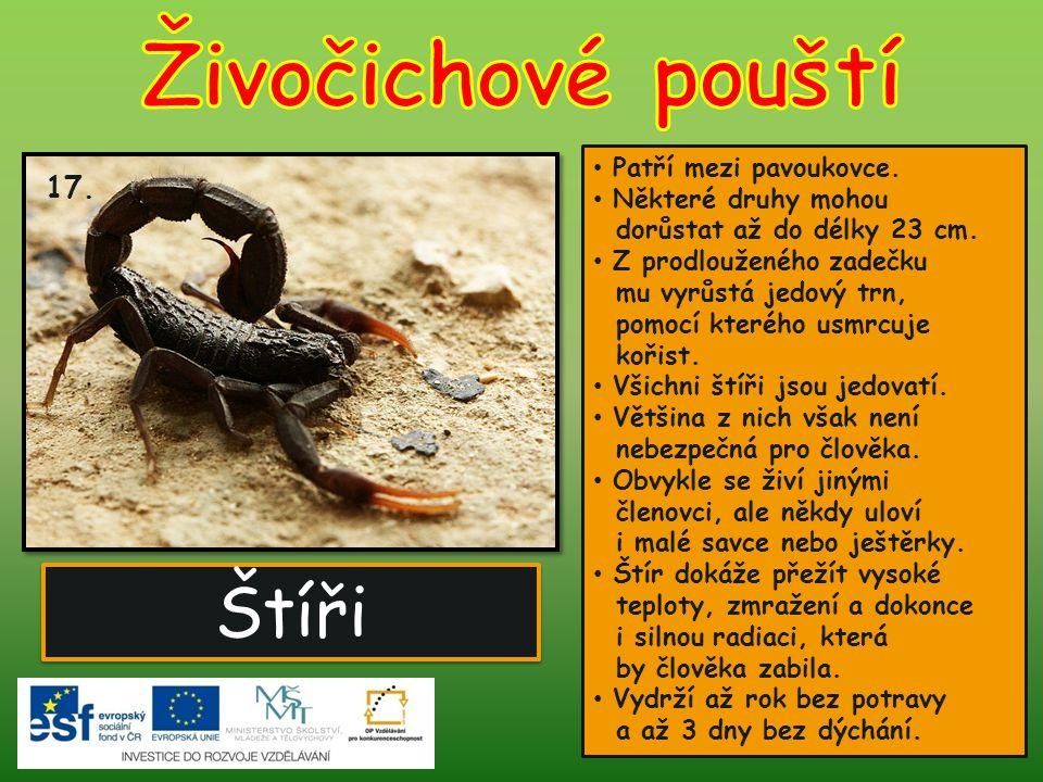 Štíři Patří mezi pavoukovce. Některé druhy mohou dorůstat až do délky 23 cm. Z prodlouženého zadečku mu vyrůstá jedový trn, pomocí kterého usmrcuje ko