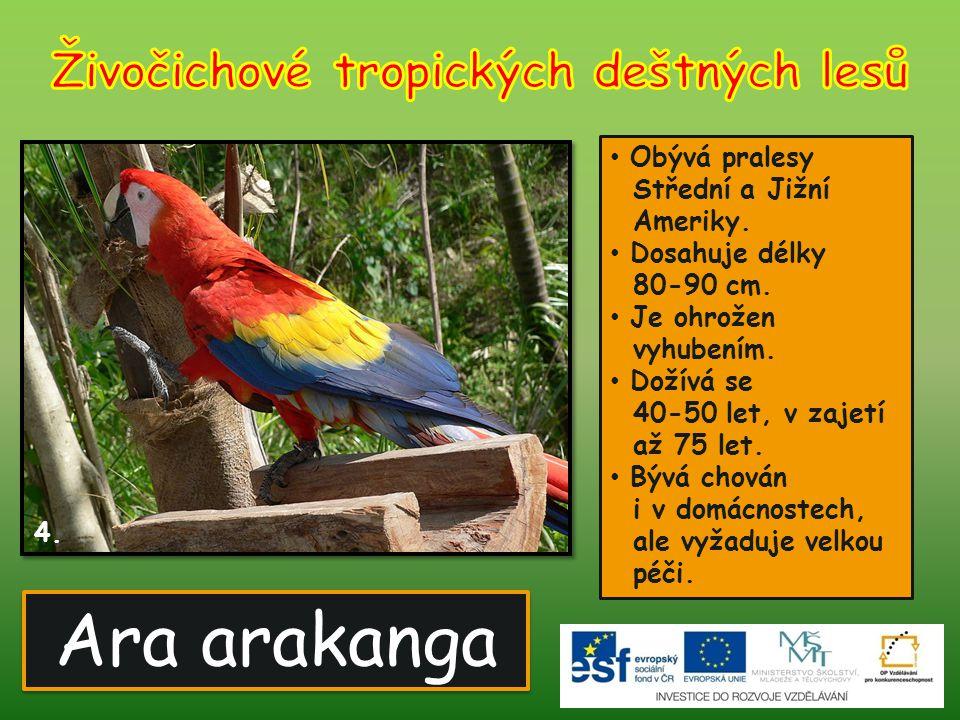 Ara arakanga 4. Obývá pralesy Střední a Jižní Ameriky. Dosahuje délky 80-90 cm. Je ohrožen vyhubením. Dožívá se 40-50 let, v zajetí až 75 let. Bývá ch