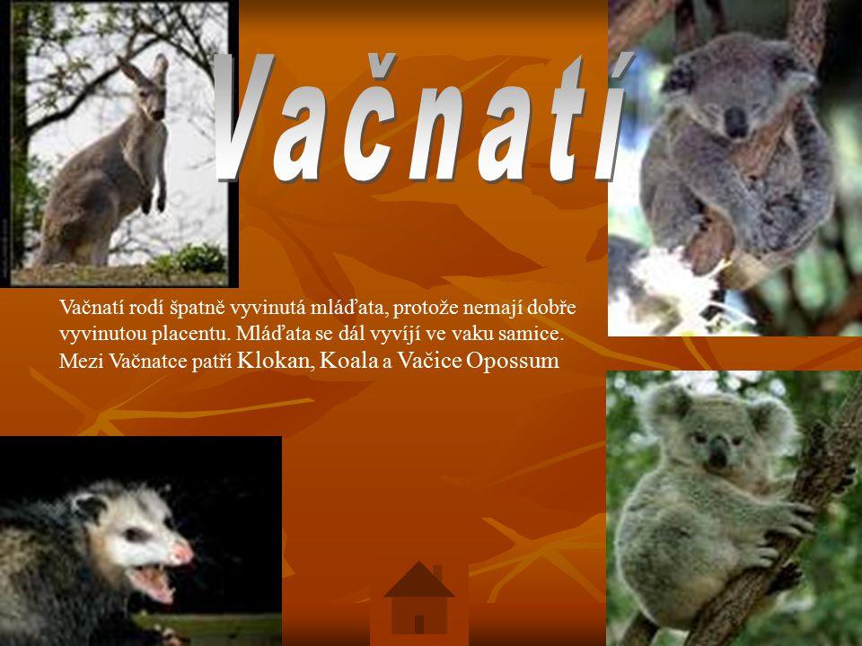Vačnatí rodí špatně vyvinutá mláďata, protože nemají dobře vyvinutou placentu.
