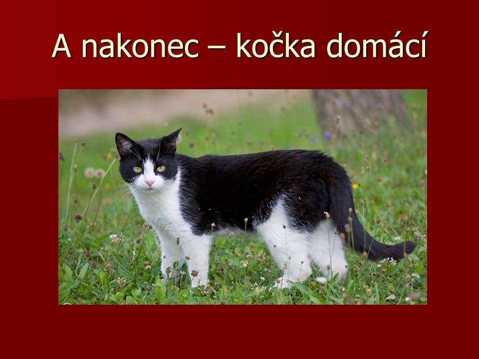 A nakonec – kočka domácí
