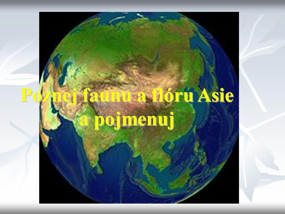 Poznej faunu a flóru Asie a pojmenuj