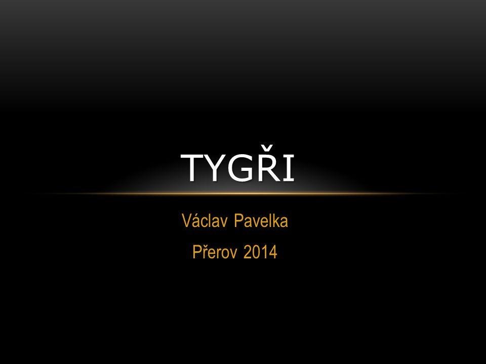 Václav Pavelka Přerov 2014 TYGŘI