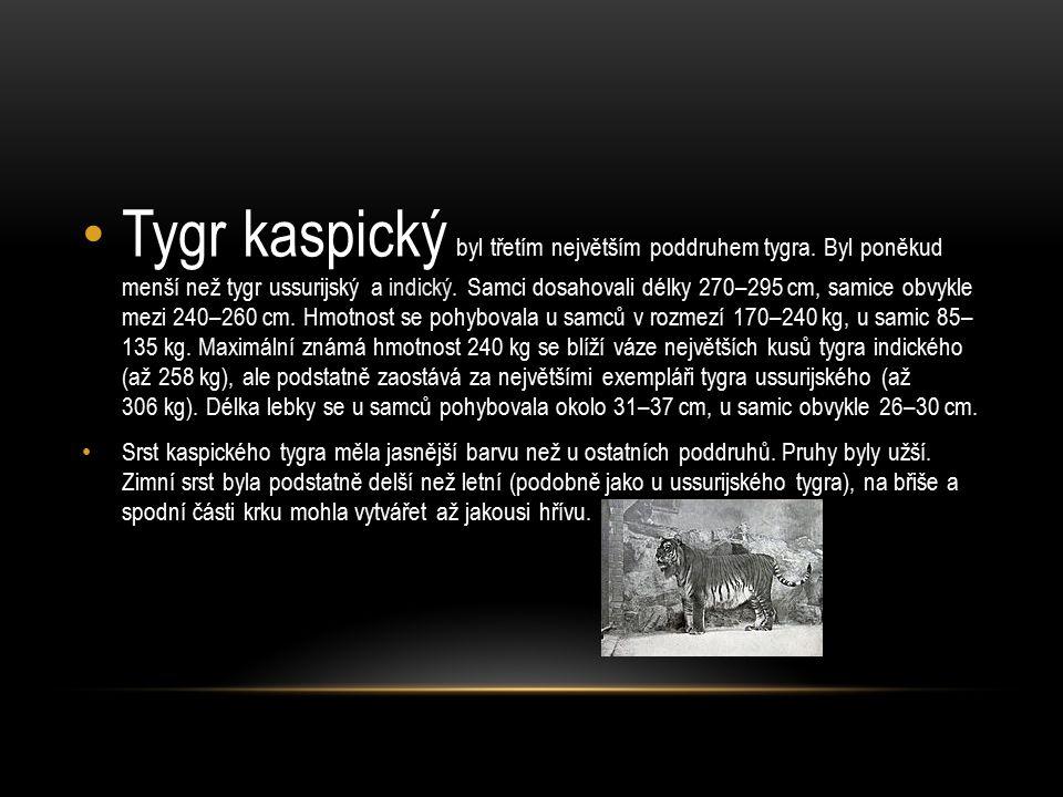 Tygr ussurijský žil původně na rozsáhlém území mezi Bajkalem a pobřežím Tichého oceánu, v současnosti žije takřka výhradně na omezeném území východního Ruska v blízkosti Ussuri, přítoku řeky Amur v Přímořském a Chabarovském kraji.