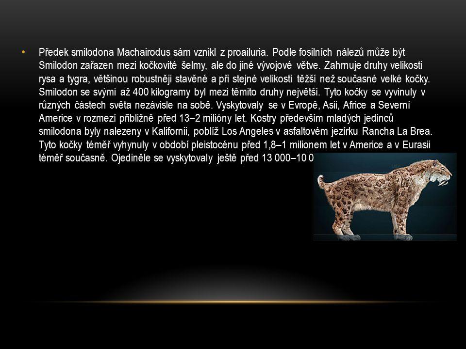 Předek smilodona Machairodus sám vznikl z proailuria. Podle fosilních nálezů může být Smilodon zařazen mezi kočkovité šelmy, ale do jiné vývojové větv
