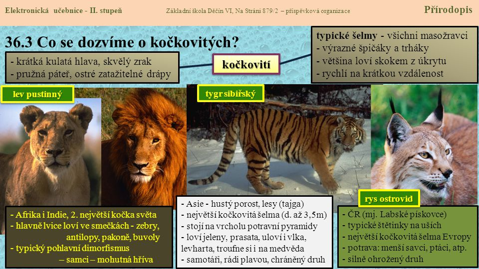 36.3 Co se dozvíme o kočkovitých.Elektronická učebnice - II.