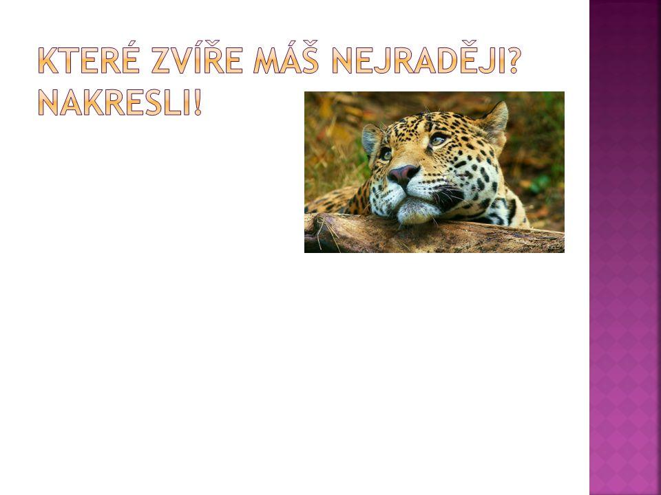  http://praha.idnes.cz/prazska-zoo-definitivne-nesmi-pouzivat-logo-s-konem- prevalskeho-phb-/praha-zpravy.aspx?c=A111122_161832_praha-zpravy_zep http://praha.idnes.cz/prazska-zoo-definitivne-nesmi-pouzivat-logo-s-konem- prevalskeho-phb-/praha-zpravy.aspx?c=A111122_161832_praha-zpravy_zep  http://www.keywordpicture.com/keyword/north%20arrow%20clip%20art/ http://www.keywordpicture.com/keyword/north%20arrow%20clip%20art/  http://www.krokodyl.org/ http://www.krokodyl.org/  http://zivazeme.cz/atlas-savcu/medved-ledni http://zivazeme.cz/atlas-savcu/medved-ledni  http://mistecko-na-dlani.tvorba-webu.net/archiv/skypee-a-jeho-libustky-8/ http://mistecko-na-dlani.tvorba-webu.net/archiv/skypee-a-jeho-libustky-8/  http://www.zoopraha.cz/cs/o-zviratech/lexikon/savci/tygr-ussurijsky http://www.zoopraha.cz/cs/o-zviratech/lexikon/savci/tygr-ussurijsky  http://cs.petclub.eu/clanek/velbloudi-133 http://cs.petclub.eu/clanek/velbloudi-133  http://www.mikebirkhead.com/EyeForAnElephant.html http://www.mikebirkhead.com/EyeForAnElephant.html  http://humor.100plus.cz/images/humor/gif/stranky/opice.htm http://humor.100plus.cz/images/humor/gif/stranky/opice.htm  http://www.cbsnews.com/video/watch/?id=6173375n http://www.cbsnews.com/video/watch/?id=6173375n  http://www.freehdbackgrounds.net/snow-leopard-tag.htm http://www.freehdbackgrounds.net/snow-leopard-tag.htm