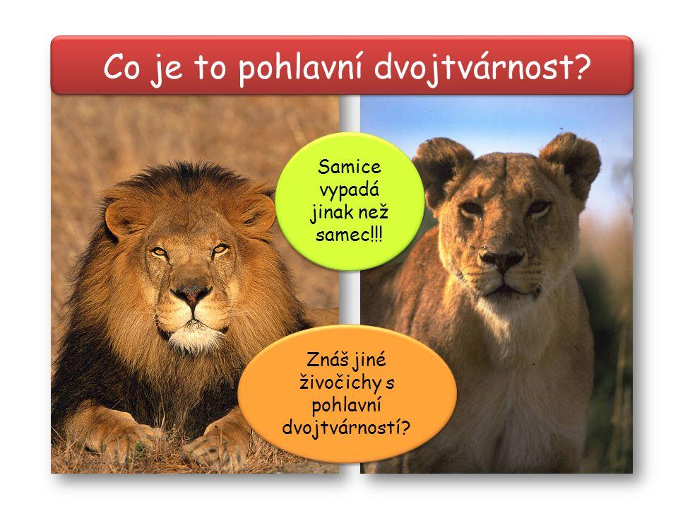 Co je to pohlavní dvojtvárnost? Znáš jiné živočichy s pohlavní dvojtvárností? Samice vypadá jinak než samec!!!