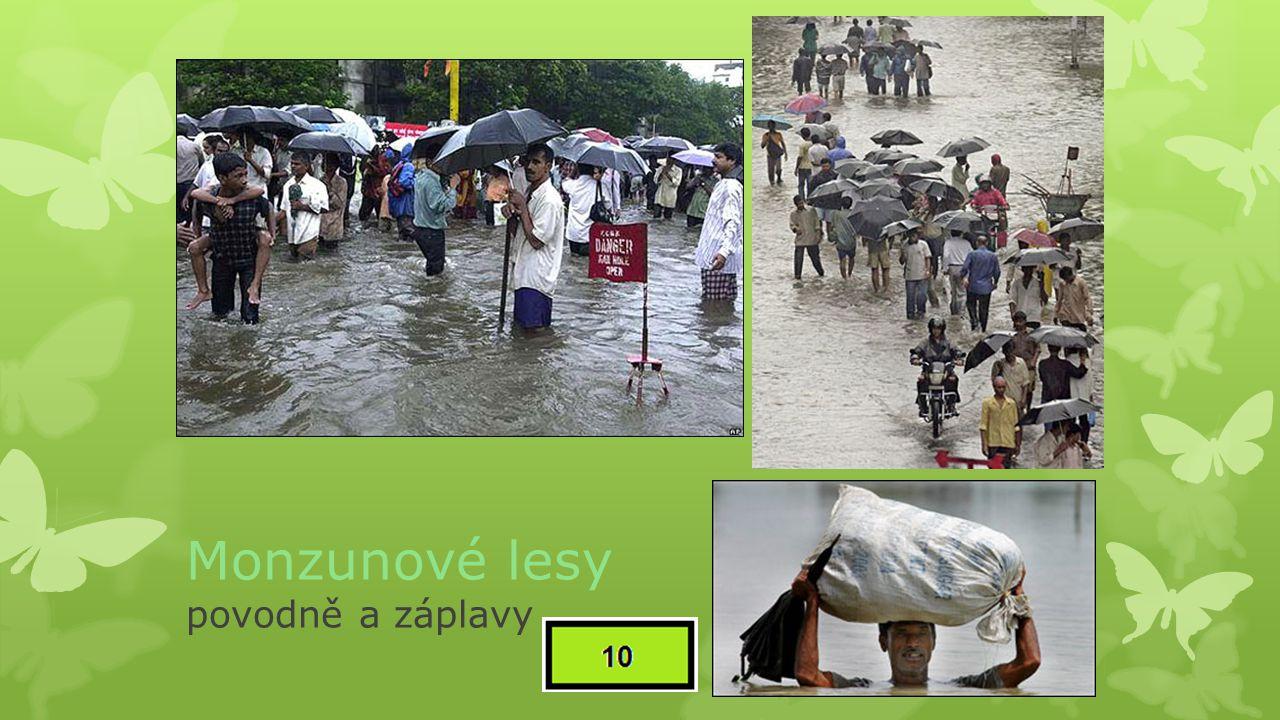 Monzunové lesy povodně a záplavy