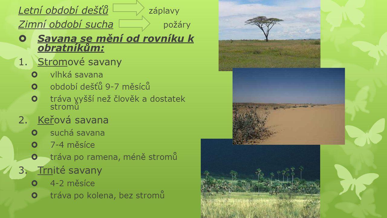 Letní období dešťů záplavy Zimní období sucha požáry  Savana se mění od rovníku k obratníkům: 1.Stromové savany  vlhká savana  období dešťů 9-7 měs