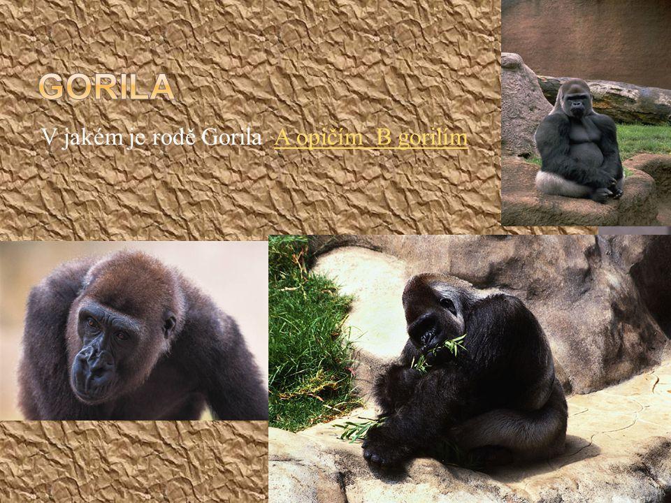 V jakém je rodě Gorila A opičím B gorilímA opičím B gorilím