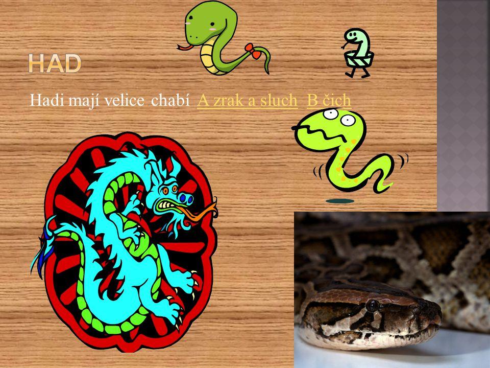 Hadi mají velice chabí A zrak a sluch B čichA zrak a sluchB čich