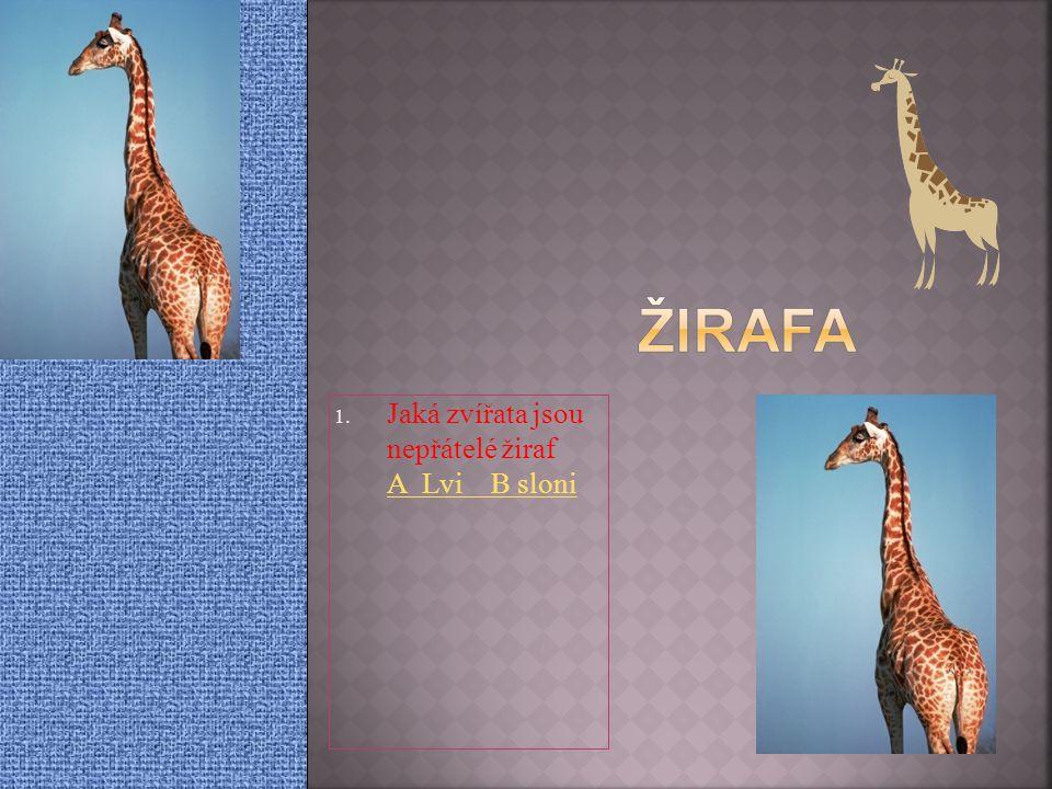 1. Jaká zvířata jsou nepřátelé žiraf A Lvi B sloni A Lvi B sloni