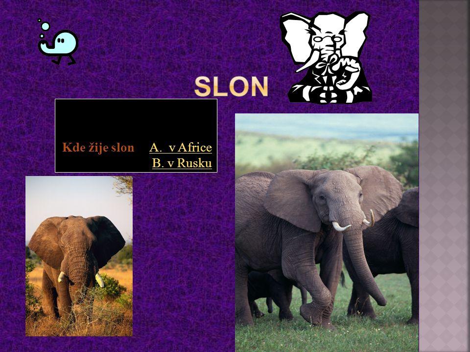 Kde žije slon A. v Africe B. v RuskuA. v Africe B. v Rusku