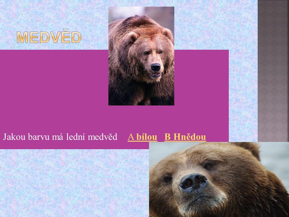 Jakou barvu má lední medvěd A bílou B HnědouA bílouB Hnědou
