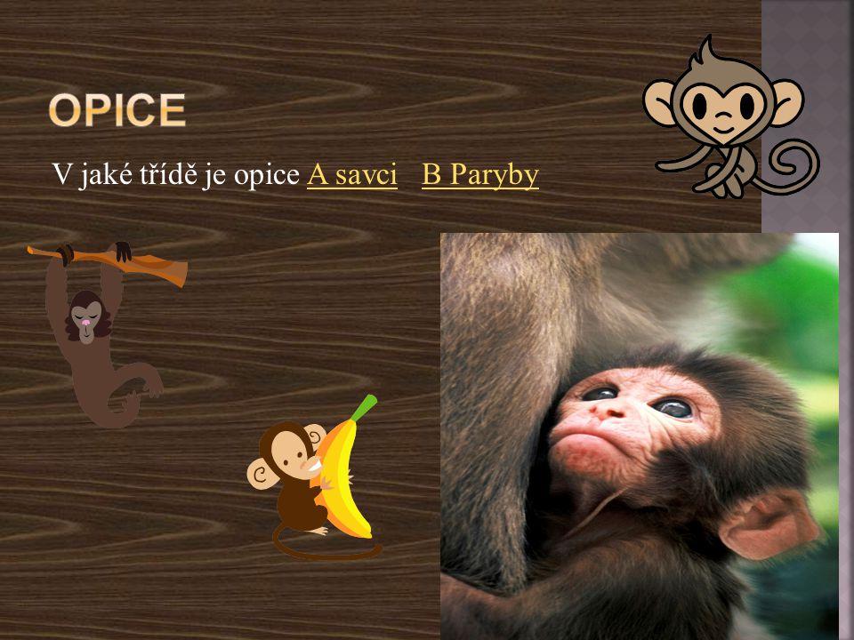 V jaké třídě je opice A savci B ParybyA savciB Paryby