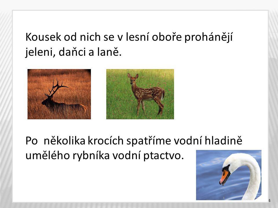 4 Kousek od nich se v lesní oboře prohánějí jeleni, daňci a laně.