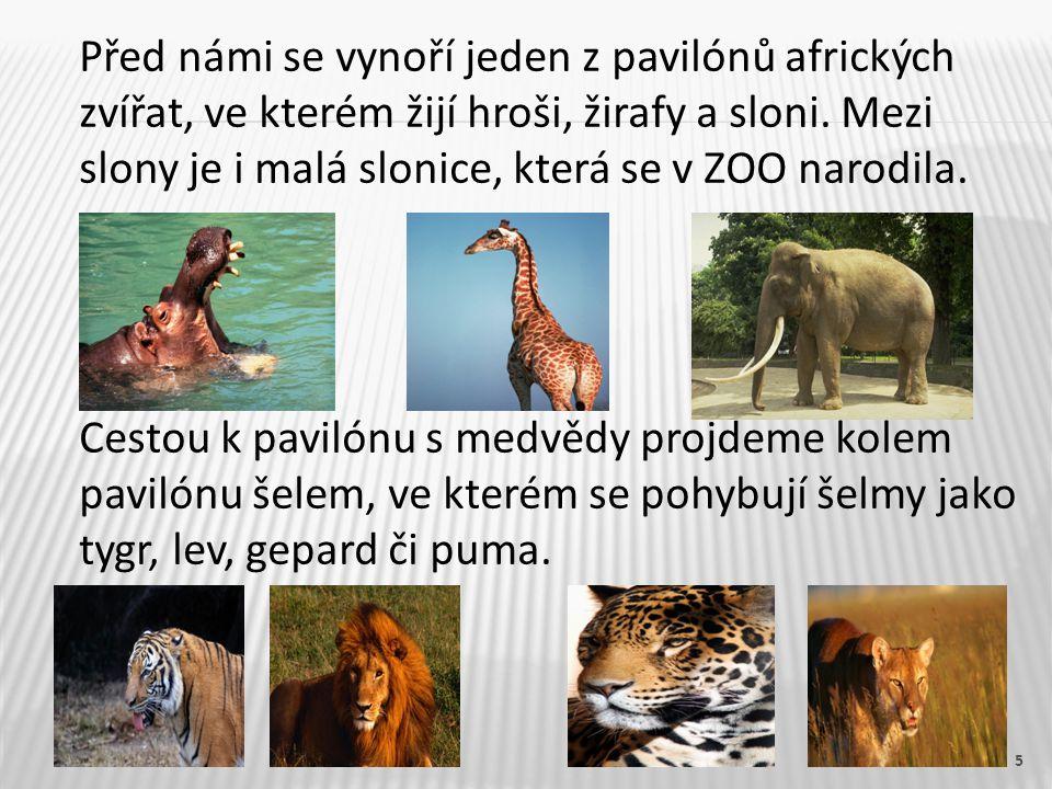 5 Před námi se vynoří jeden z pavilónů afrických zvířat, ve kterém žijí hroši, žirafy a sloni. Mezi slony je i malá slonice, která se v ZOO narodila.