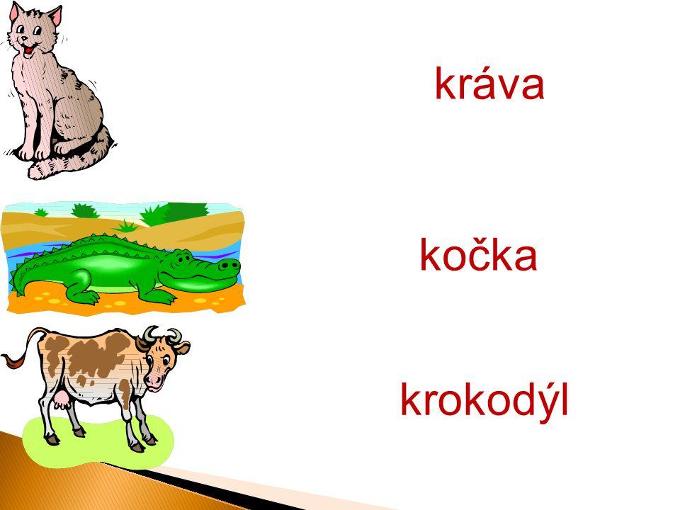 krokodýl kočka kráva