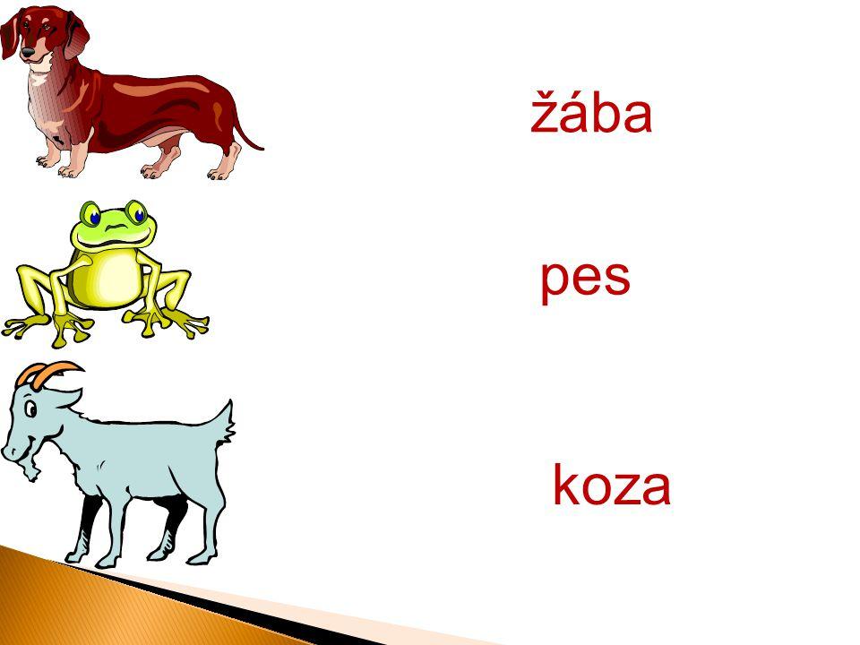 koza pes žába