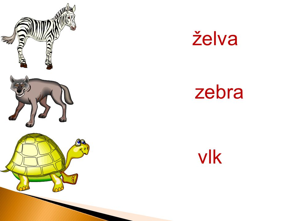 želva zebra vlk