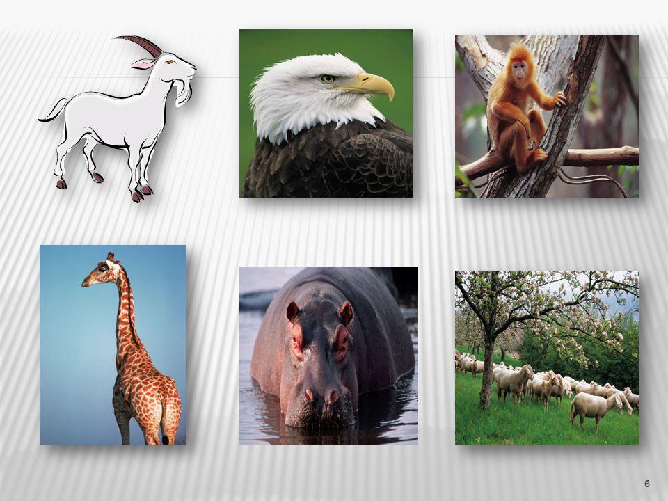 Úkoly: 3.Která zvířata měla mláďata. 4. Vyjmenuj alespoň 2 ptáky, o kterých jsme četli.