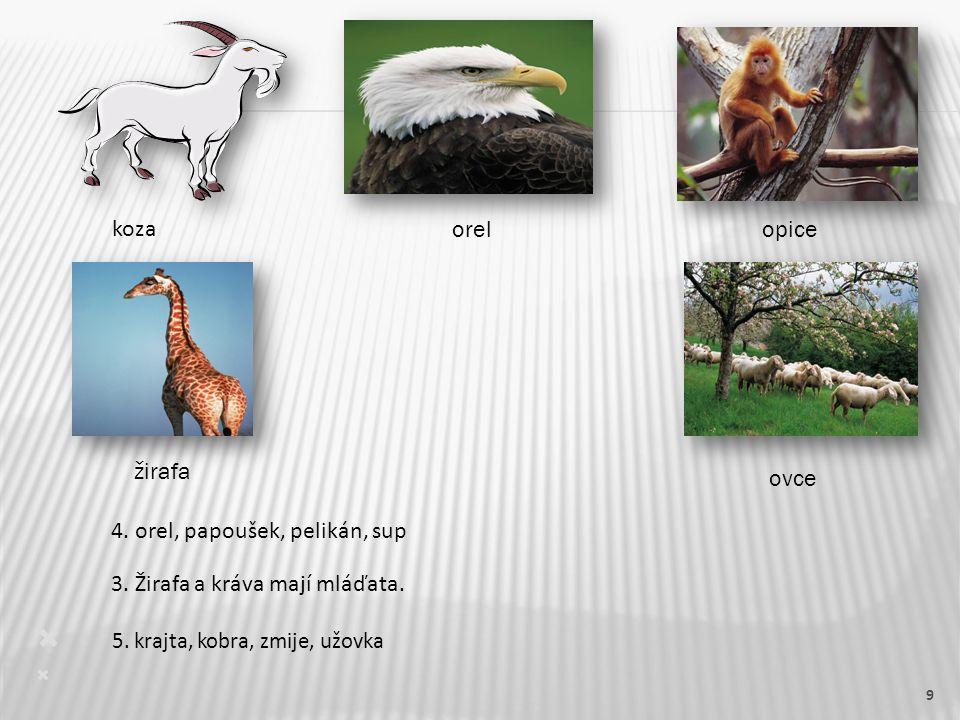 9  5. krajta, kobra, zmije, užovka  3. Žirafa a kráva mají mláďata.