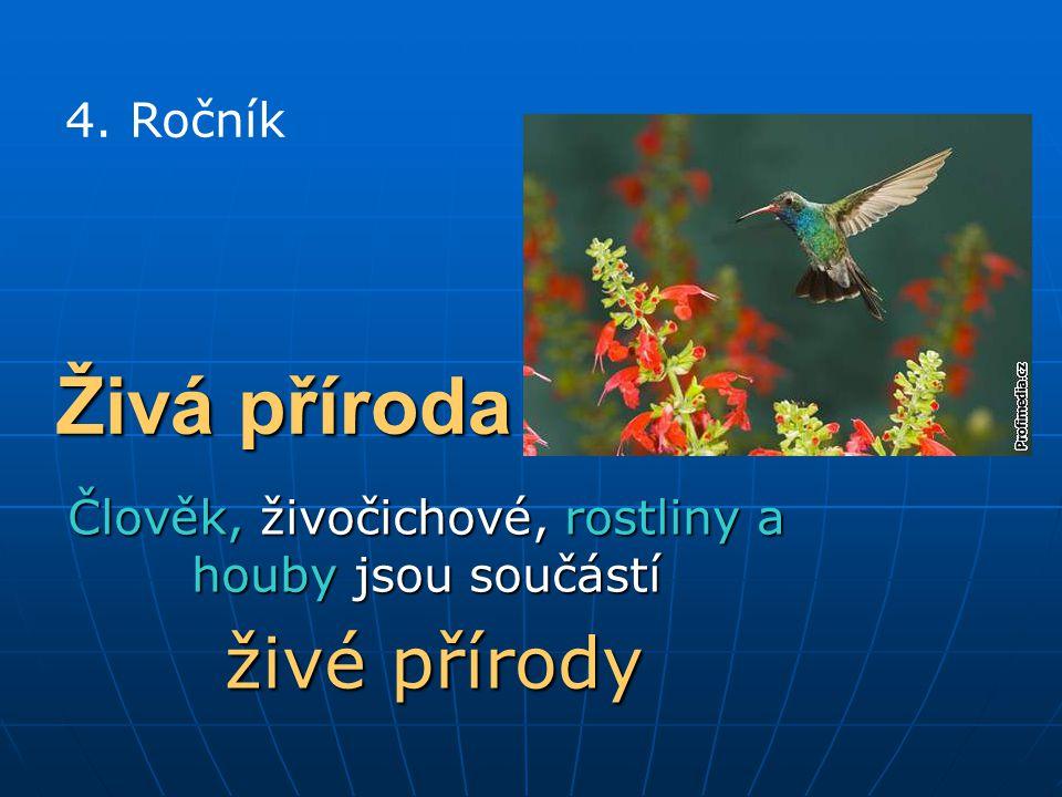 Živá příroda Člověk, živočichové, rostliny a houby jsou součástí živé přírody živé přírody 4.