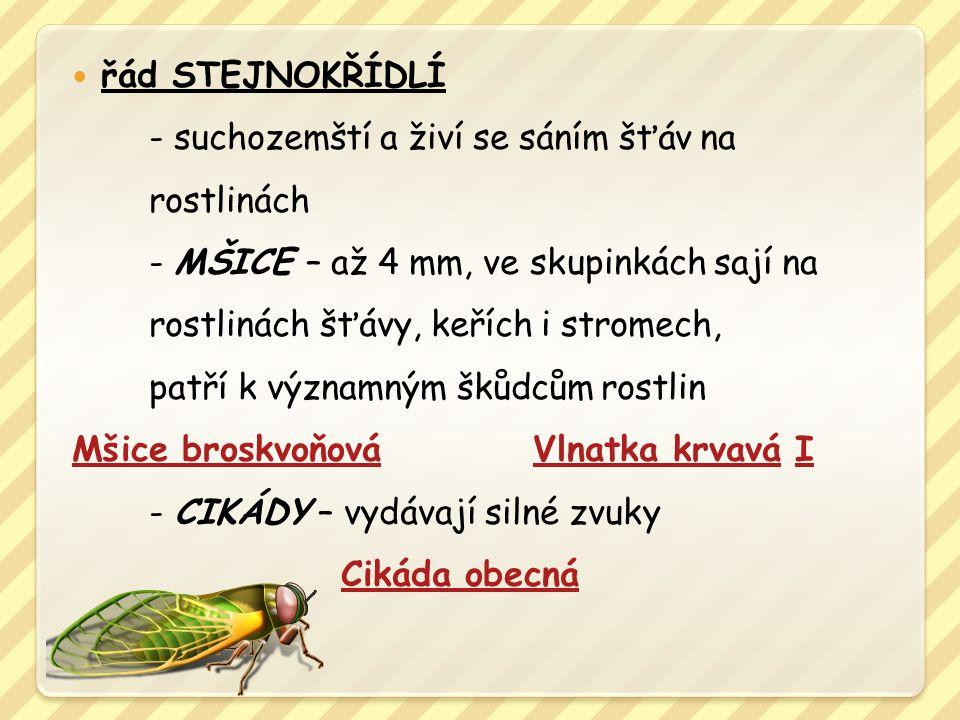 řád STEJNOKŘÍDLÍ - suchozemští a živí se sáním šťáv na rostlinách - MŠICE – až 4 mm, ve skupinkách sají na rostlinách šťávy, keřích i stromech, patří k významným škůdcům rostlin Mšice broskvoňováVlnatka krvaváMšice broskvoňováVlnatka krvavá II - CIKÁDY – vydávají silné zvuky Cikáda obecná