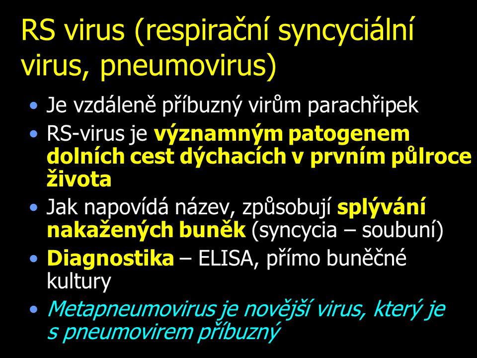 RS virus (respirační syncyciální virus, pneumovirus) Je vzdáleně příbuzný virům parachřipek RS-virus je významným patogenem dolních cest dýchacích v prvním půlroce života Jak napovídá název, způsobují splývání nakažených buněk (syncycia – soubuní) Diagnostika – ELISA, přímo buněčné kultury Metapneumovirus je novější virus, který je s pneumovirem příbuzný