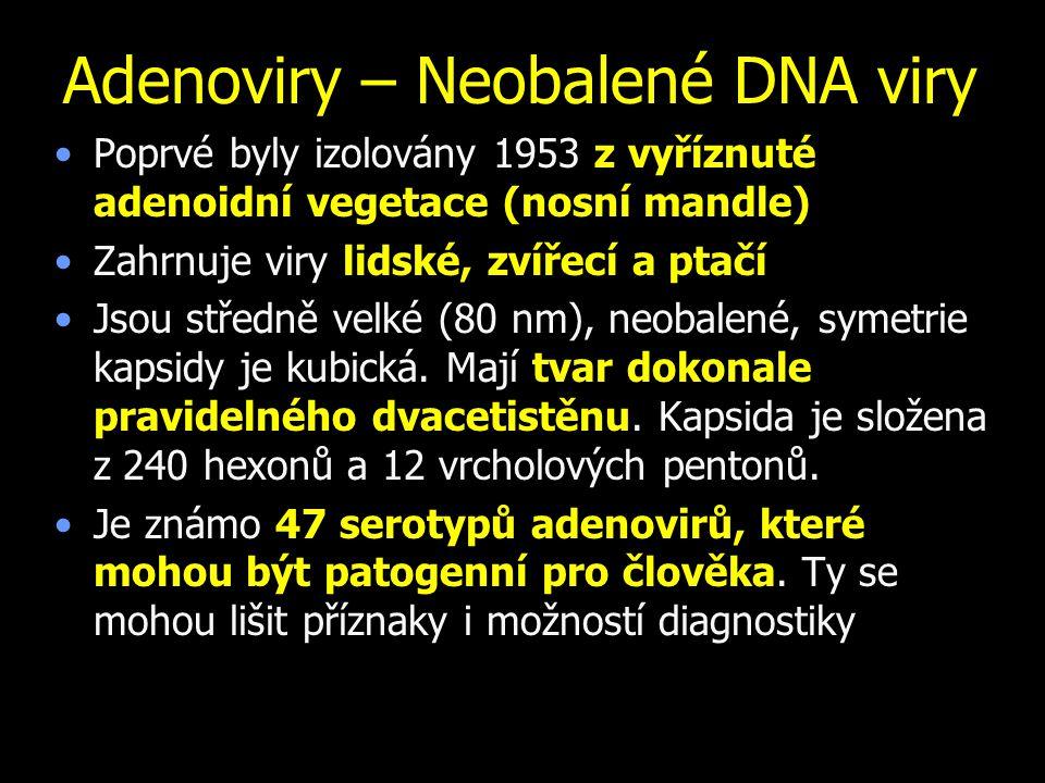 Adenoviry – Neobalené DNA viry Poprvé byly izolovány 1953 z vyříznuté adenoidní vegetace (nosní mandle) Zahrnuje viry lidské, zvířecí a ptačí Jsou středně velké (80 nm), neobalené, symetrie kapsidy je kubická.