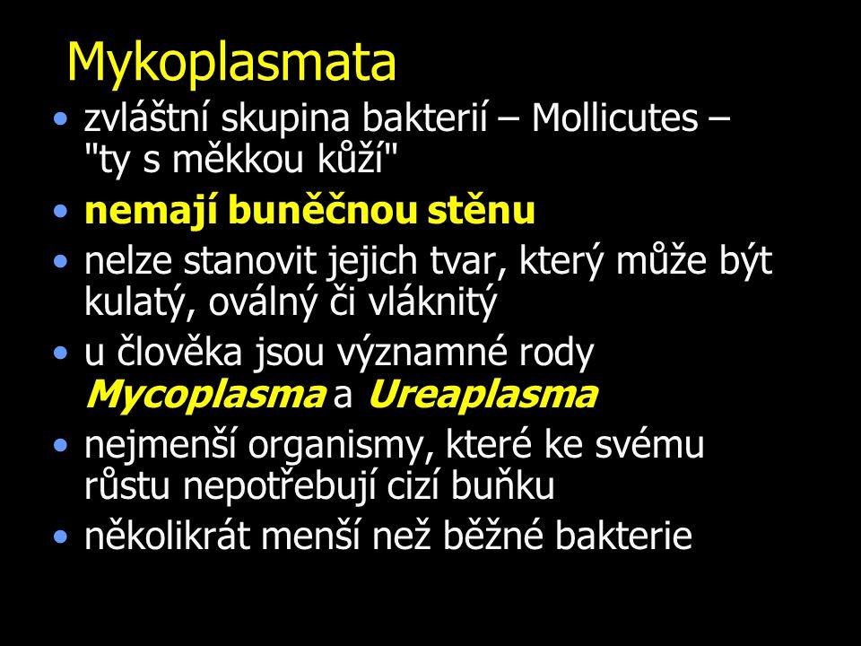 Mykoplasmata zvláštní skupina bakterií – Mollicutes – ty s měkkou kůží nemají buněčnou stěnu nelze stanovit jejich tvar, který může být kulatý, oválný či vláknitý u člověka jsou významné rody Mycoplasma a Ureaplasma nejmenší organismy, které ke svému růstu nepotřebují cizí buňku několikrát menší než běžné bakterie