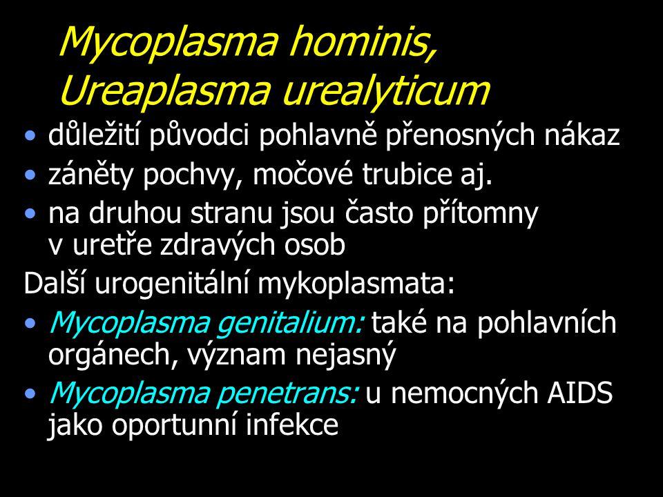 Mycoplasma hominis, Ureaplasma urealyticum důležití původci pohlavně přenosných nákaz záněty pochvy, močové trubice aj.