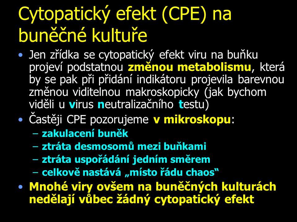 """Cytopatický efekt (CPE) na buněčné kultuře Jen zřídka se cytopatický efekt viru na buňku projeví podstatnou změnou metabolismu, která by se pak při přidání indikátoru projevila barevnou změnou viditelnou makroskopicky (jak bychom viděli u virus neutralizačního testu) Častěji CPE pozorujeme v mikroskopu: –zakulacení buněk –ztráta desmosomů mezi buňkami –ztráta uspořádání jedním směrem –celkově nastává """"místo řádu chaos Mnohé viry ovšem na buněčných kulturách nedělají vůbec žádný cytopatický efekt"""