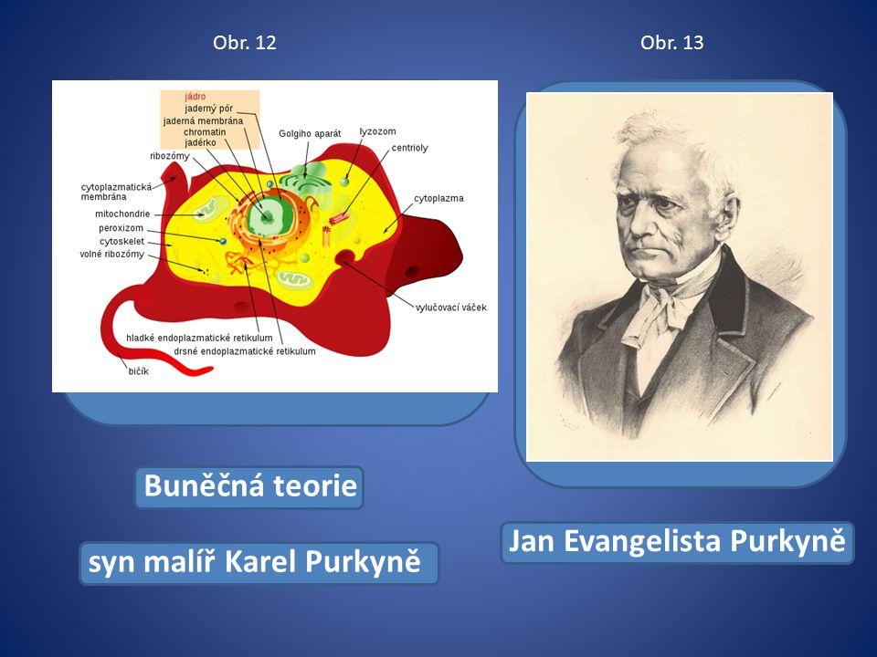Buněčná teorie syn malíř Karel Purkyně Jan Evangelista Purkyně Obr. 12Obr. 13