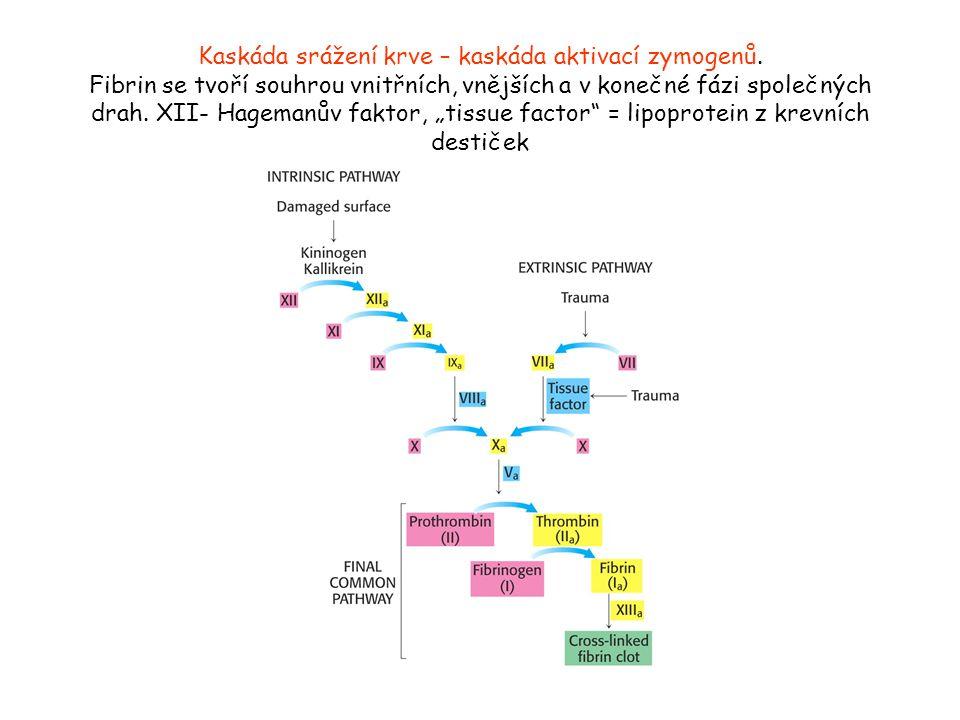 Kaskáda srážení krve – kaskáda aktivací zymogenů. Fibrin se tvoří souhrou vnitřních, vnějších a v konečné fázi společných drah. XII- Hagemanův faktor,