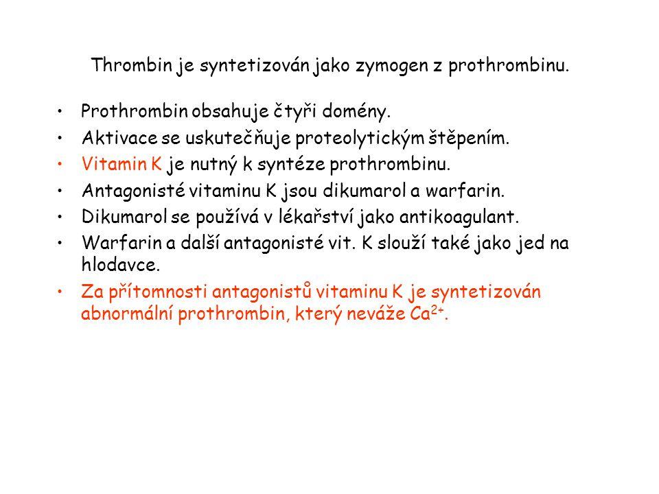 Thrombin je syntetizován jako zymogen z prothrombinu. Prothrombin obsahuje čtyři domény. Aktivace se uskutečňuje proteolytickým štěpením. Vitamin K je