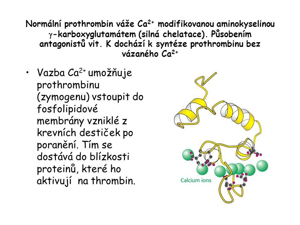 Normální prothrombin váže Ca 2+ modifikovanou aminokyselinou  -karboxyglutamátem (silná chelatace). Působením antagonistů vit. K dochází k syntéze pr