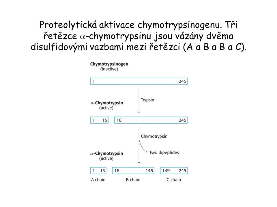 Proteolytická aktivace chymotrypsinogenu. Tři řetězce  -chymotrypsinu jsou vázány dvěma disulfidovými vazbami mezi řetězci (A a B a B a C).
