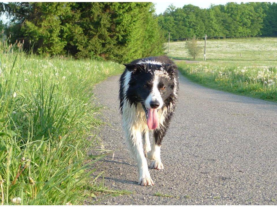 A každé ráno se chodím proběhnout po loukách