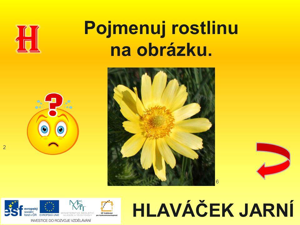 HLAVÁČEK JARNÍ Pojmenuj rostlinu na obrázku. 2 6
