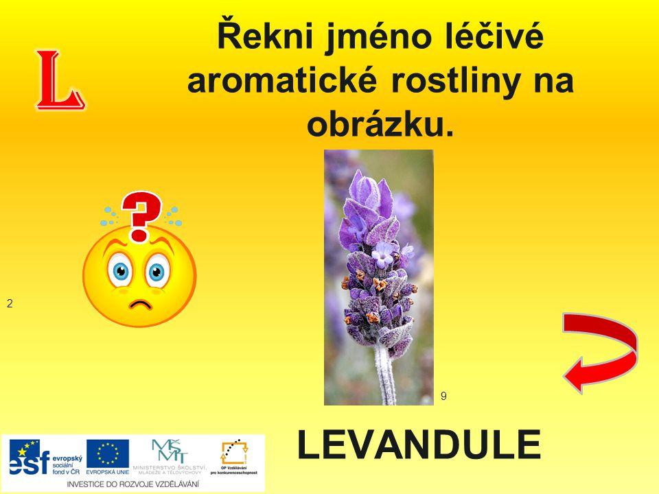 Řekni jméno léčivé aromatické rostliny na obrázku. LEVANDULE 2 9