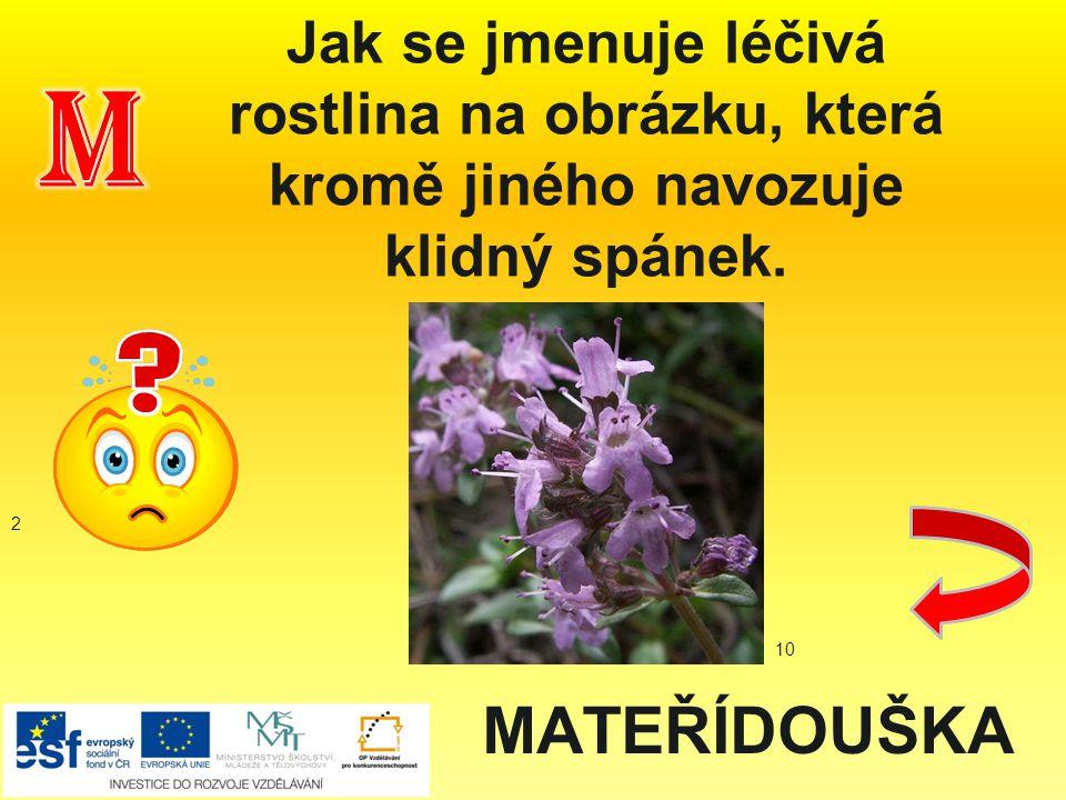 Jak se jmenuje léčivá rostlina na obrázku, která kromě jiného navozuje klidný spánek. MATEŘÍDOUŠKA 2 10