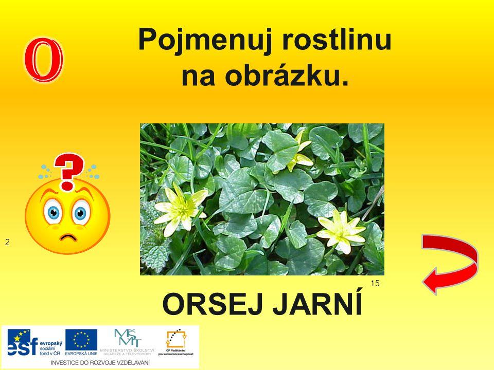 Pojmenuj rostlinu na obrázku. 2 15 ORSEJ JARNÍ