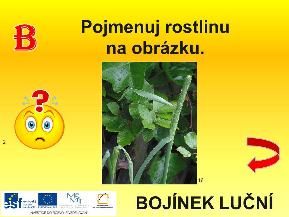 Pojmenuj rostlinu na obrázku. BOJÍNEK LUČNÍ 2 18