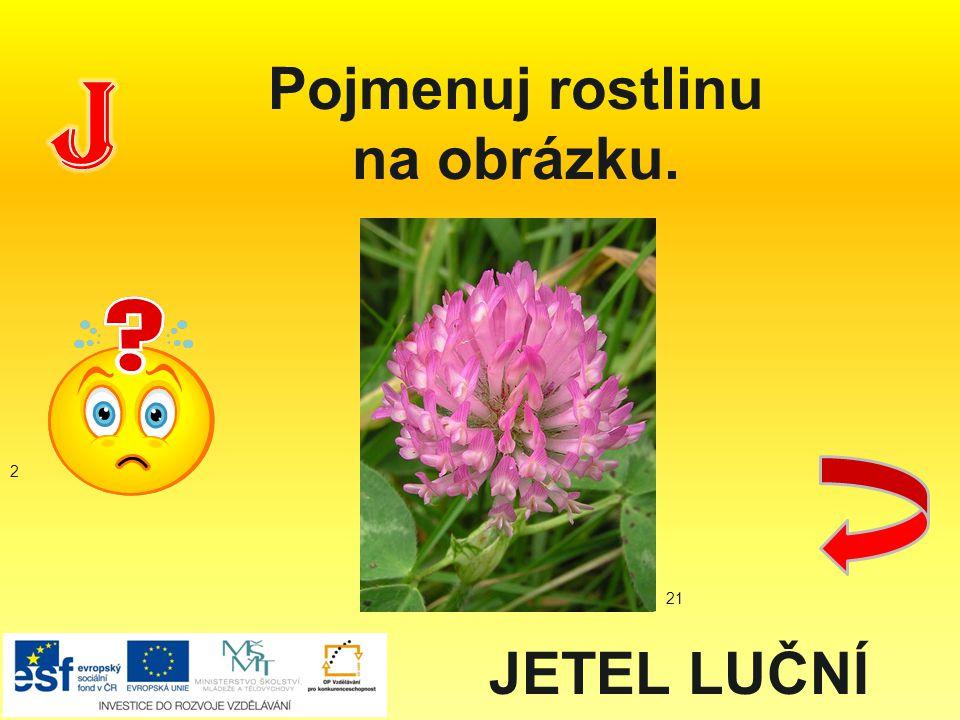 Pojmenuj rostlinu na obrázku. JETEL LUČNÍ 2 21