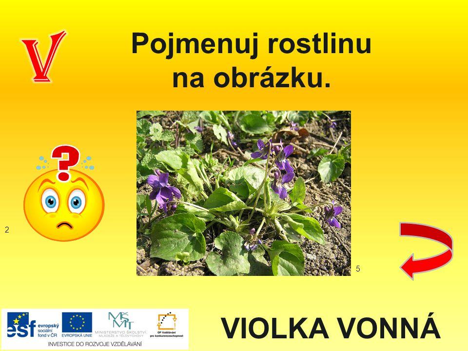 Pojmenuj rostlinu na obrázku. VIOLKA VONNÁ 2 5
