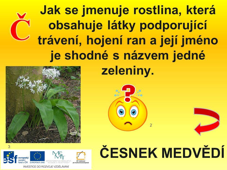 Jak se jmenuje rostlina, která obsahuje látky podporující trávení, hojení ran a její jméno je shodné s názvem jedné zeleniny. ČESNEK MEDVĚDÍ 2 3