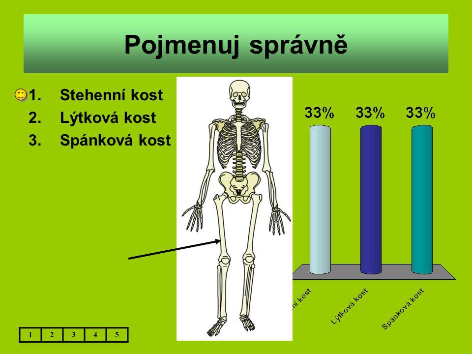 Pojmenuj správně 1.Stehenní kost 2.Lýtková kost 3.Spánková kost 12345