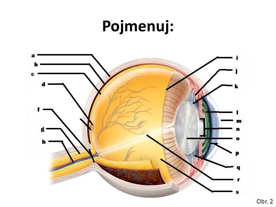 řešení: a)bělima b)cévnatka c)sítnice d)žlutá skvrna, makula e)- f)slepá skvrna g)optický nerv h)centrální sítnicová tepna a žíla i)ora serrata j)řasnaté těleso k)ligamenta řasnatého tělesa l)duhovka m)rohovka n)zornice o)čočka p)přední komora oční q)zadní komora oční r)cévní zásobení sítnice s)sklivec Obr.